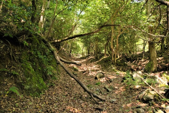林業架線作業主任者資格とは?資格概要と合格率、資格取得方法を解説!